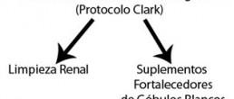 Terapia Clark y cancer doctora Hulda Clark
