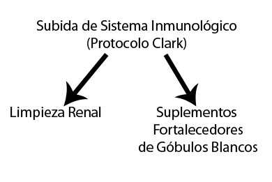 Subida sistema inmunologico